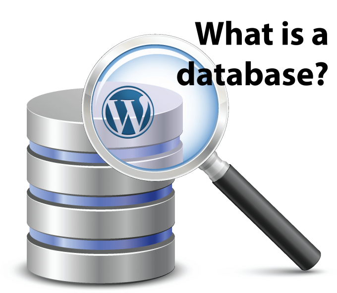 What is a WordPress database?